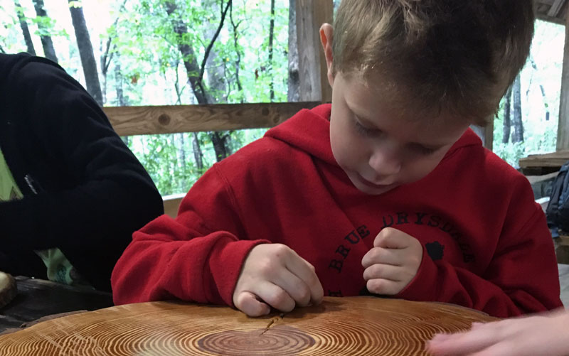 Child counting tree rings at Holmes ESF