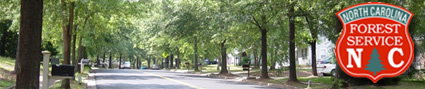 Urban Forestry banner