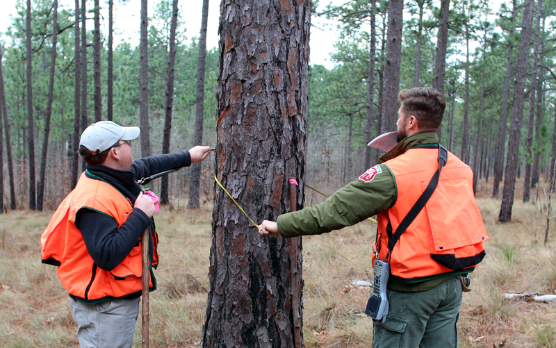 Photo of FIA Activities in forest