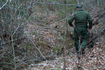 Photo of forester inspecting land