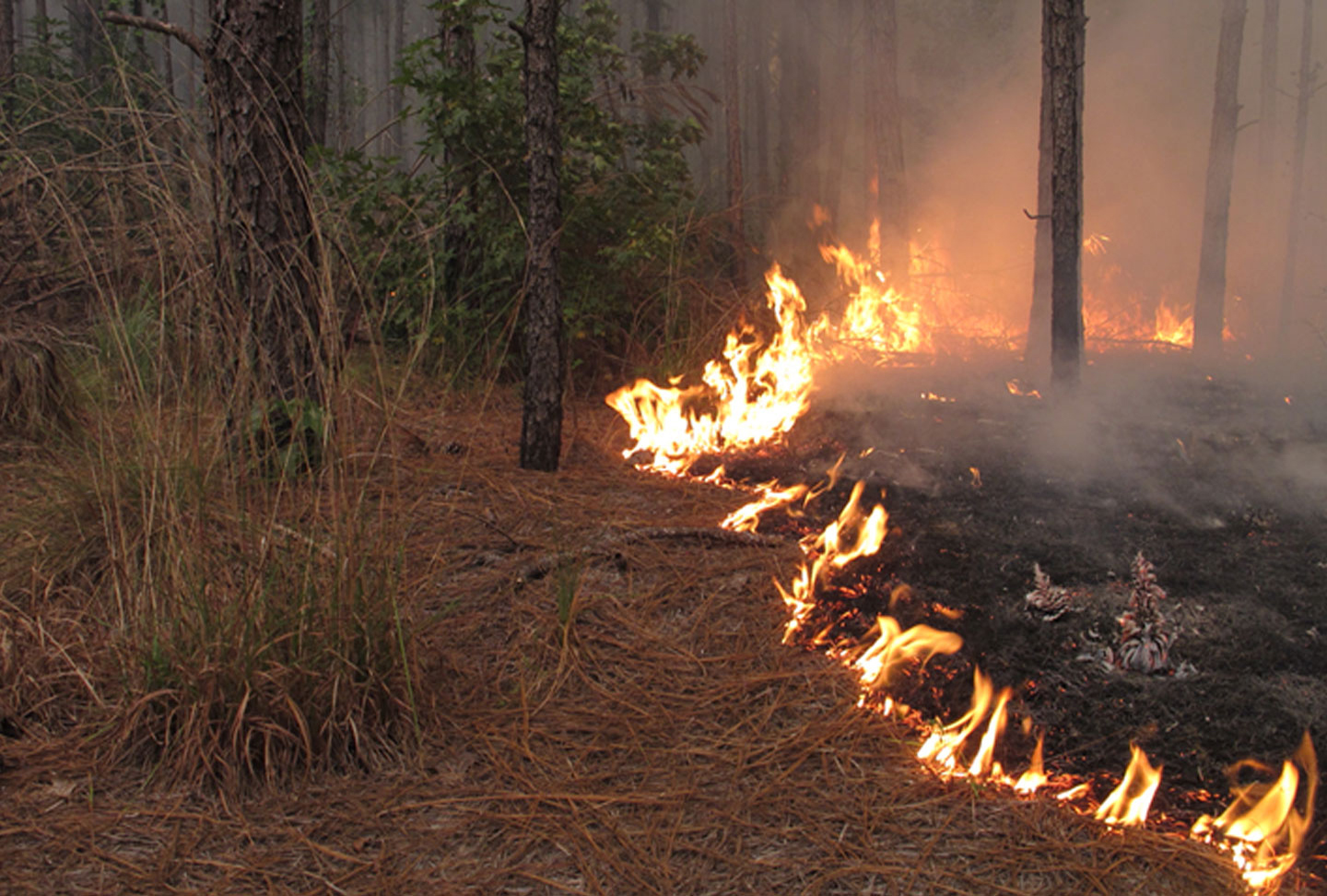 Photo of small flames from prescribed fire in a forest
